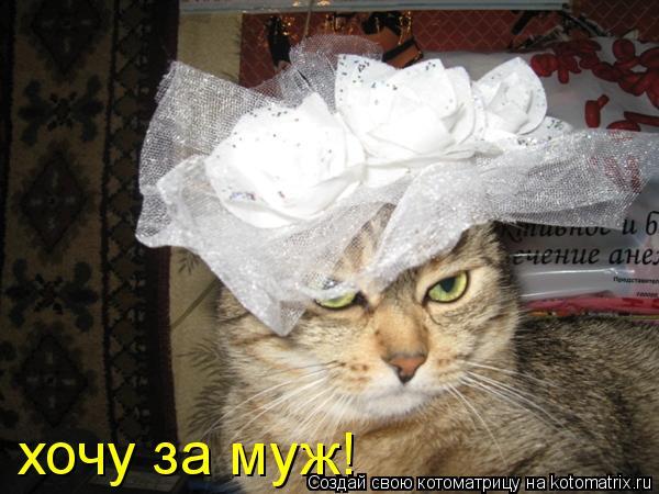 Котоматрица: хочу за муж!