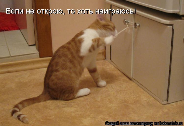 Котоматрица: Если не открою, то хоть наиграюсь!