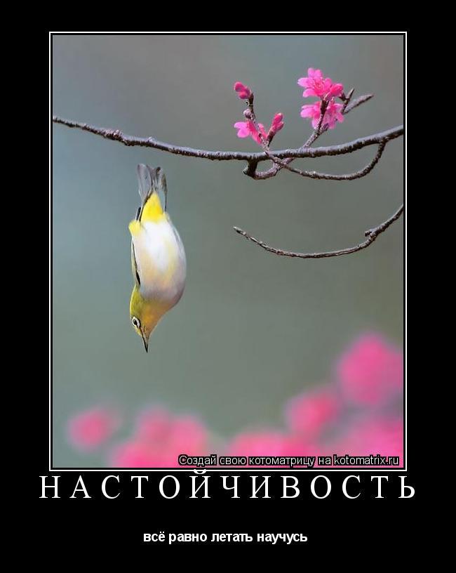 Котоматрица: настойчивость всё равно летать научусь