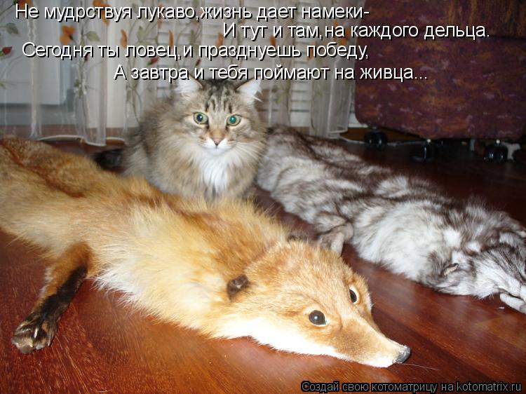 Котоматрица: Не мудрствуя лукаво,жизнь дает намеки- И тут и там,на каждого дельца. Сегодня ты ловец,и празднуешь победу, А завтра и тебя поймают на живца...