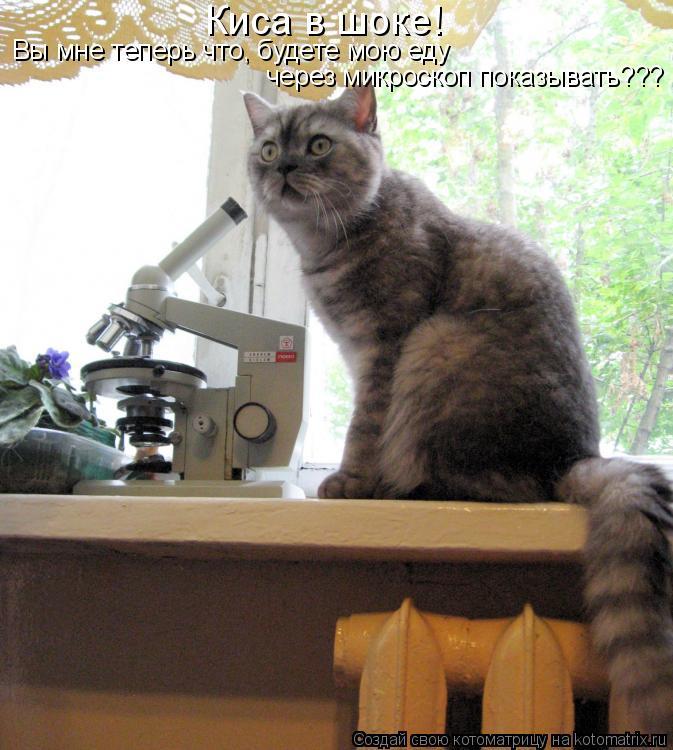 Котоматрица: Киса в шоке! Вы мне теперь что, будете мою еду  через микроскоп показывать???