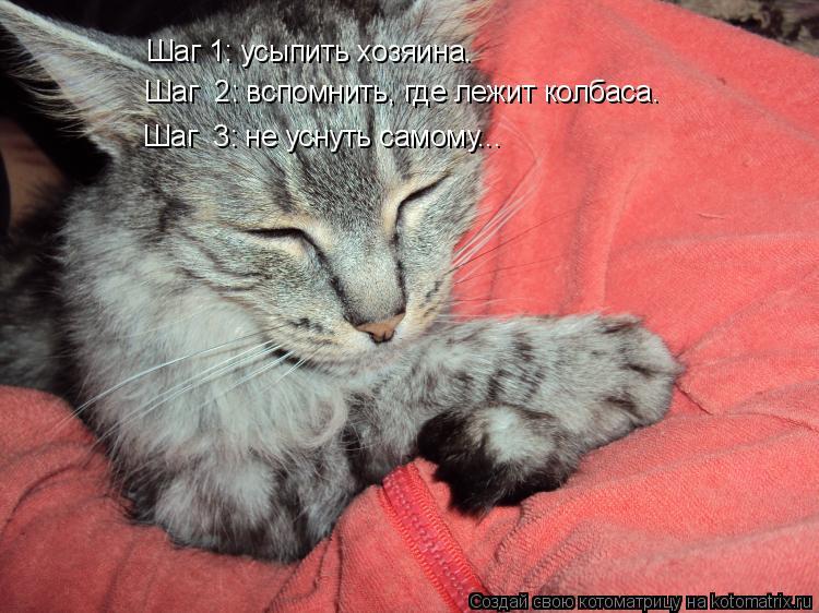 Котоматрица - Шаг 1: усыпить хозяина. Шаг  2: вспомнить, где лежит колбаса. Шаг  3: