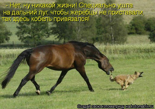 Котоматрица: - Нет, ну никакой жизни! Специально ушла на дальний луг, чтобы жеребцы не приставали,  так здесь кобель привязался!