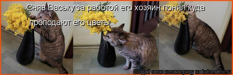 Котоматрица: Сняв Ваську за работой его хозяин понял куда проподают его цветы.