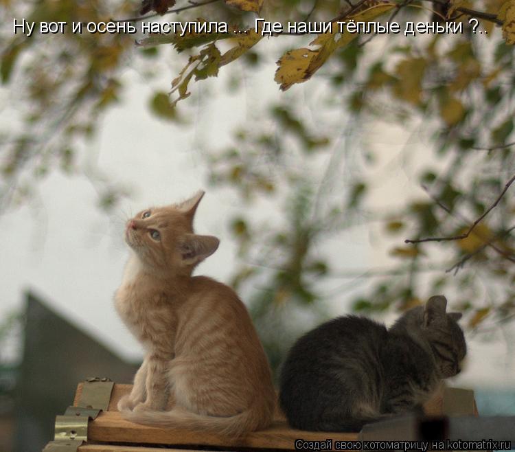 Котоматрица: Ну вот и осень наступила ... Где наши тёплые деньки ?..