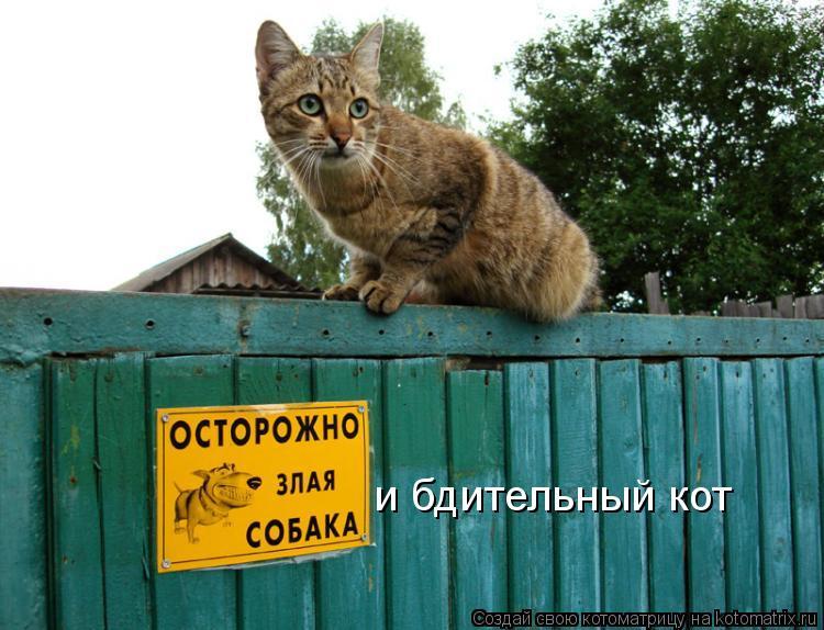 Котоматриця!)))) - Страница 4 686031