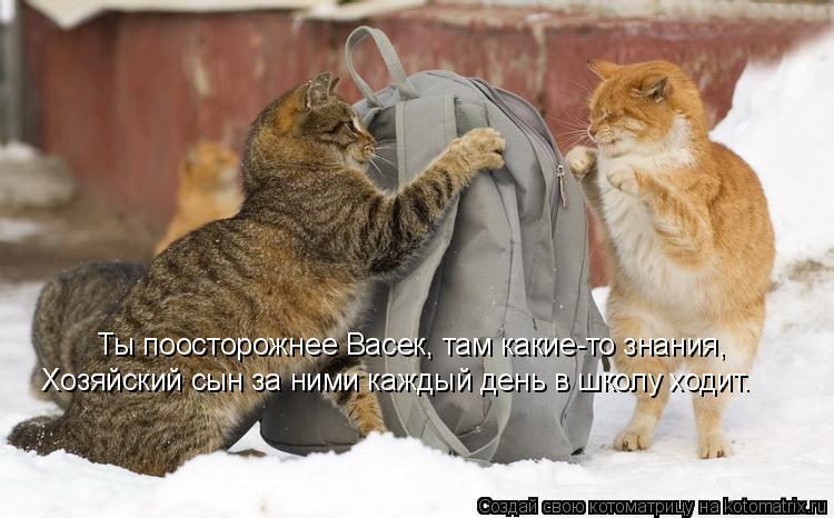 Котоматрица: Ты поосторожнее Васек, там какие-то знания, Хозяйский сын за ними каждый день в школу ходит.