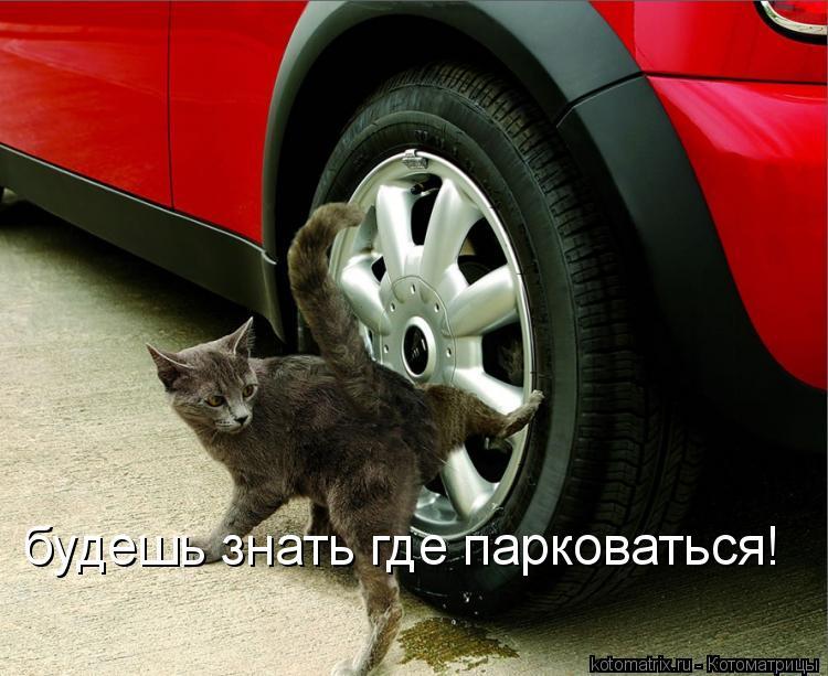 Котоматрица: будешь знать где парковаться!