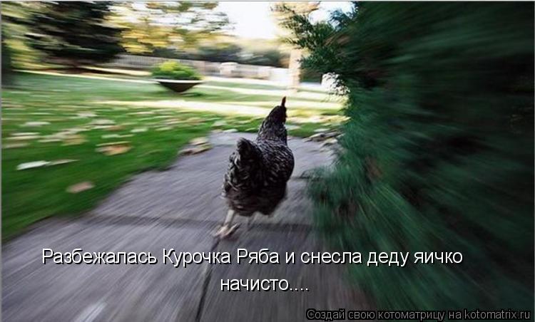 Котоматрица: Разбежалась Курочка Ряба и снесла деду яичко начисто....