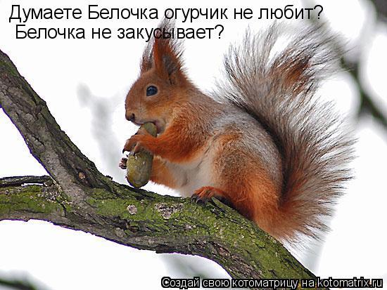Котоматрица: Думаете Белочка огурчик не любит? Белочка не закусывает?