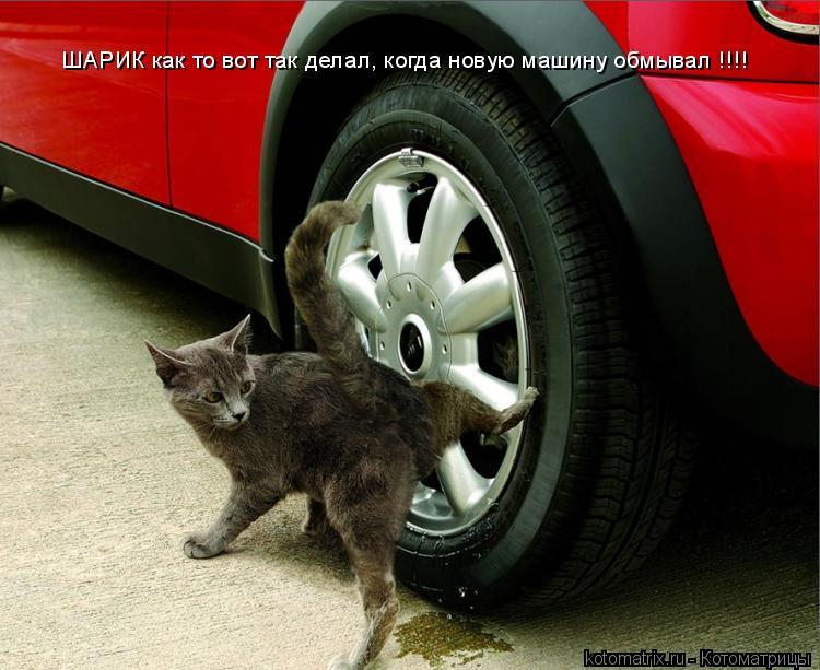 Котоматрица: ШАРИК как то вот так делал, когда новую машину обмывал !!!!