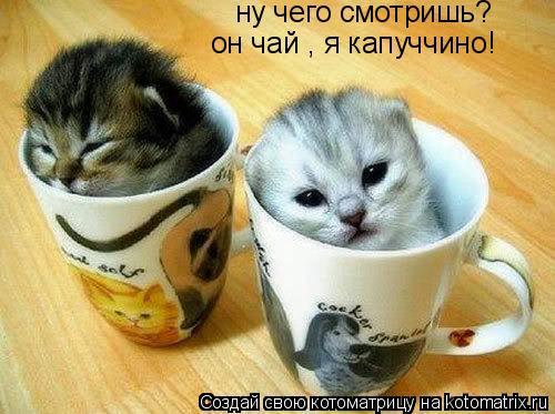 http://kotomatrix.ru/images/lolz/2010/09/23/686432.jpg