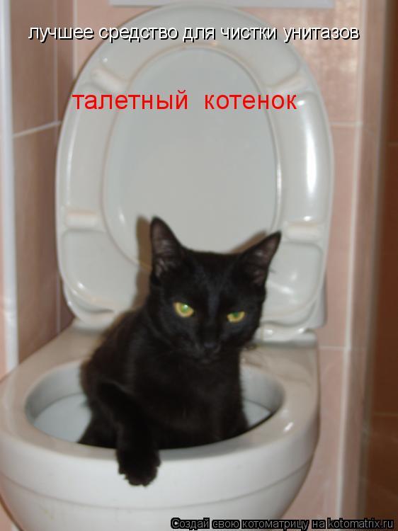Котоматрица: лучшее средство для чистки унитазов талетный  котенок
