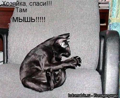 Котоматрица: Хозяйка, спаси!!! Там МЫШЬ!!!!!