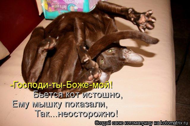 Котоматрица: -Господи-ты-Боже-мой! Бьется кот истошно, Ему мышку показали, Так...неосторожно!