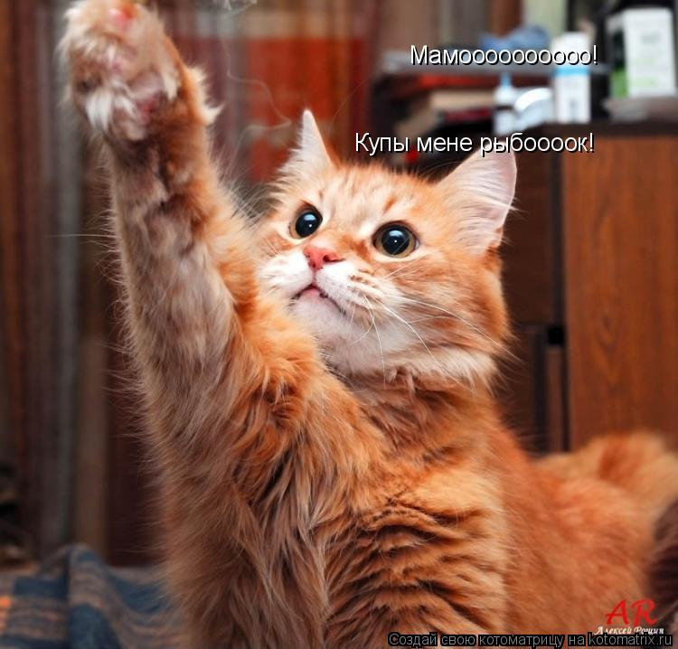 Котоматрица: Мамоооооооооо! Купы мене рыбоооок!