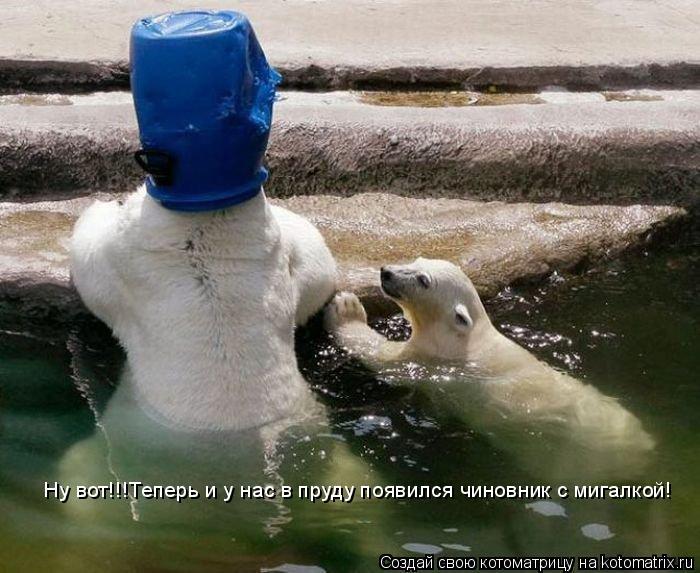 Котоматрица: Ну вот!!!Теперь и у нас в пруду появился чиновник с мигалкой!