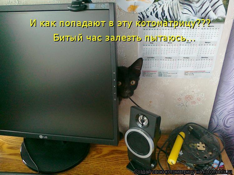Котоматрица: И как попадают в эту котоматрицу??? Битый час залезть пытаюсь...