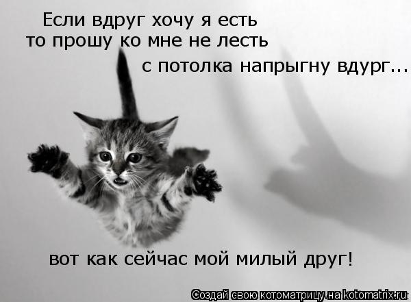 Котоматрица: Если вдруг хочу я есть  то прошу ко мне не лесть с потолка напрыгну вдург... вот как сейчас мой милый друг !