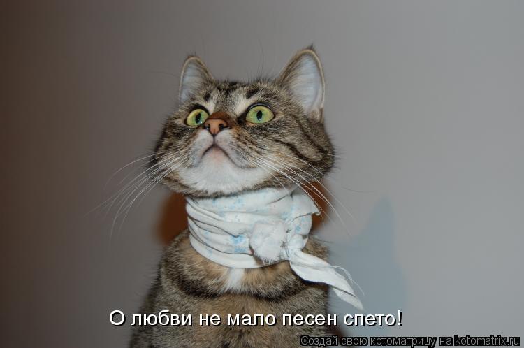 Котоматрица: О любви не мало песен спето!