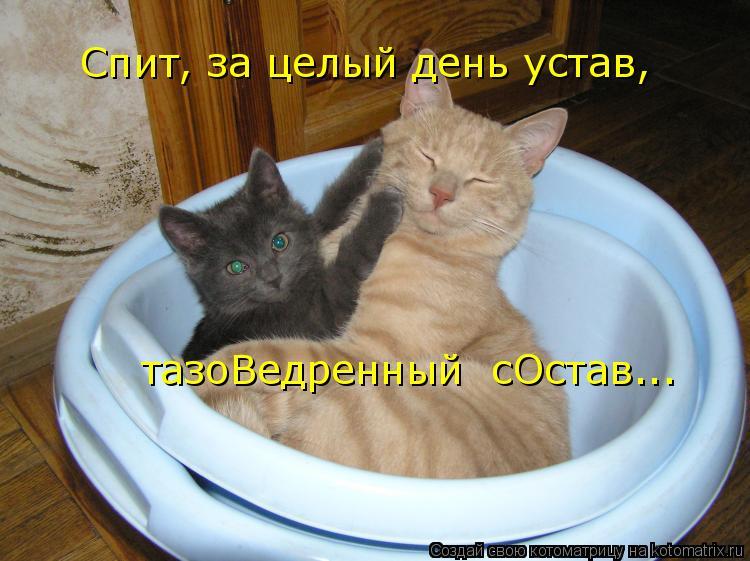 Котоматрица: Спит, за целый день устав, тазоВедренный  сОстав...