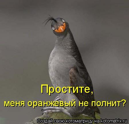 Котоматрица: Простите,  меня оранжевый не полнит?