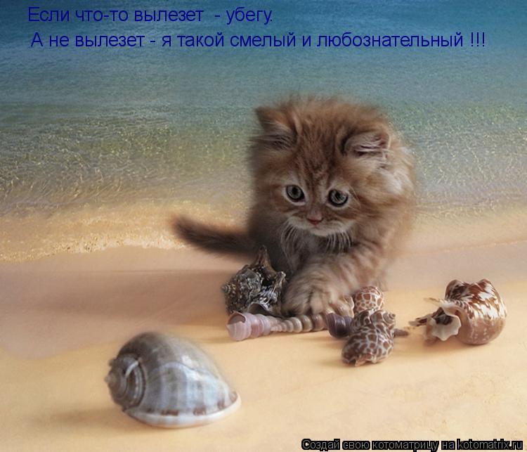 http://kotomatrix.ru/images/lolz/2010/09/24/686851.jpg
