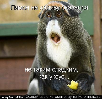 Котоматрица: Лимон на халяву оказался не таким сладким, как уксус...