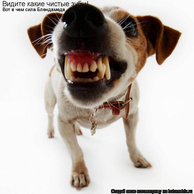 Котоматрица: Видите какие чистые зубы! Вот в чем сила Блендамеда