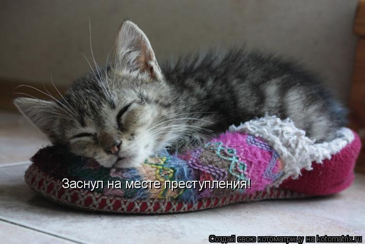 Котоматрица: Заснул на месте преступления!