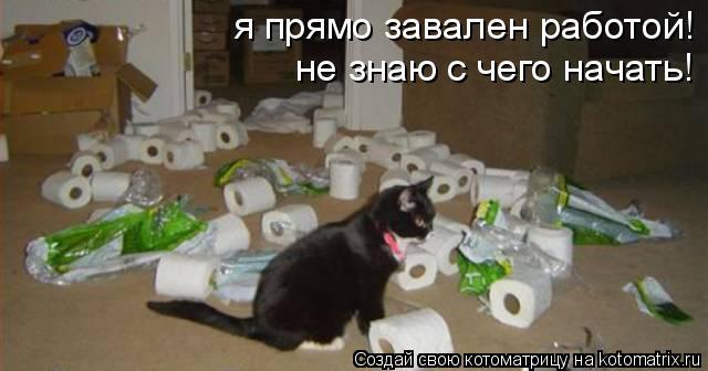 Котоматрица: я прямо завален работой! не знаю с чего начать!