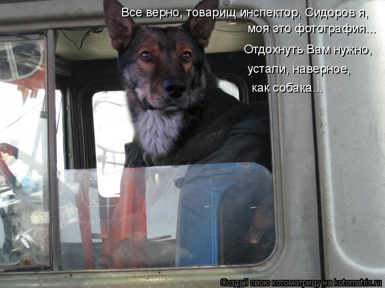 Котоматрица: Все верно, товарищ инспектор, Сидоров я, моя это фотография... Отдохнуть Вам нужно,  устали, наверное, как собака...