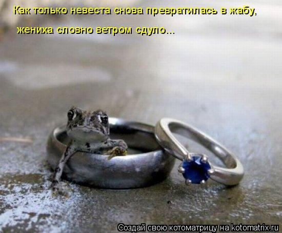 Котоматрица: Как только невеста снова превратилась в жабу, жениха словно ветром сдуло...
