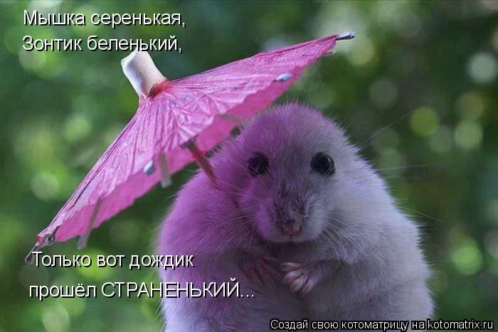 Котоматрица: Мышка серенькая, Зонтик беленький,  Только вот дождик  прошёл СТРАНЕНЬКИЙ...