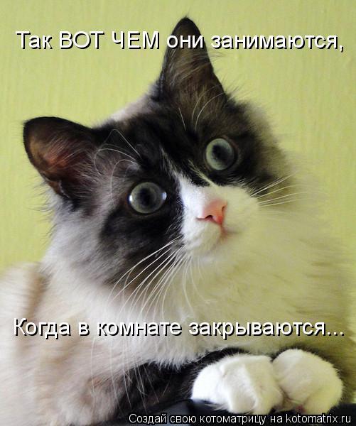 Котоматрица: Так ВОТ ЧЕМ они занимаются, Когда в комнате закрываются...