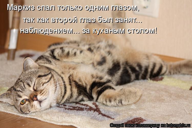 Котоматрица: Маркиз спал только одним глазом,  так как второй глаз был занят... наблюдением... за куханым столом!