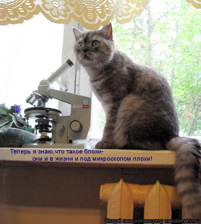 Котоматрица: Теперь я знаю,что такое блохи- они и в жизни и под микроскопом плохи!