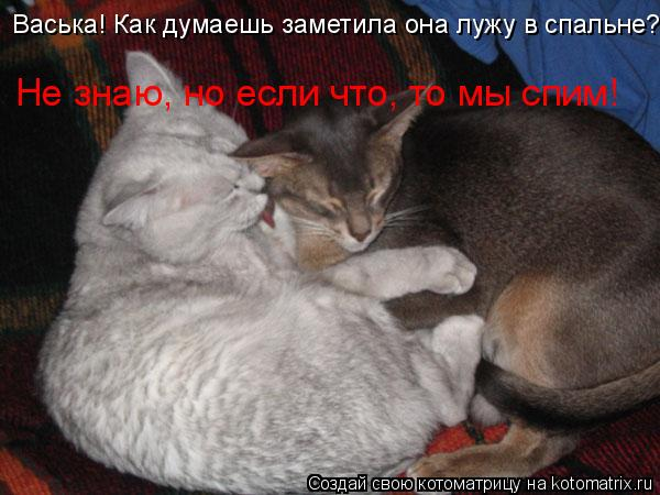 Котоматрица: Васька! Как думаешь заметила она лужу в спальне? Не знаю, но если что, то мы спим!