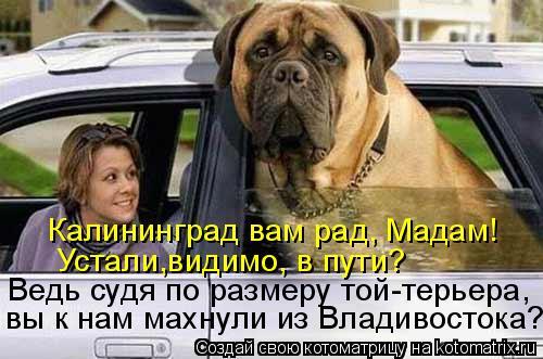 Котоматрица: Устали,видимо, в пути?  Ведь судя по размеру той-терьера,  Калининград вам рад, Мадам! вы к нам махнули из Владивостока?