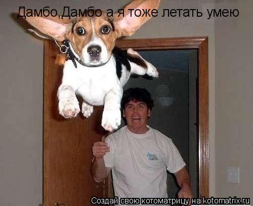 Котоматрица: Дамбо,Дамбо а я тоже летать умею