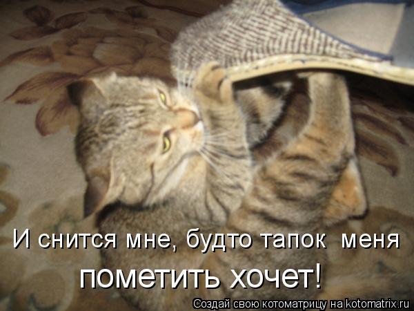 Котоматрица: И снится мне, будто тапок  меня  пометить хочет!