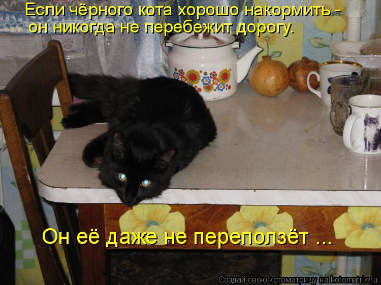 Если чёрного кота хорошо накормить - он никогда не перебежит дорогу. О