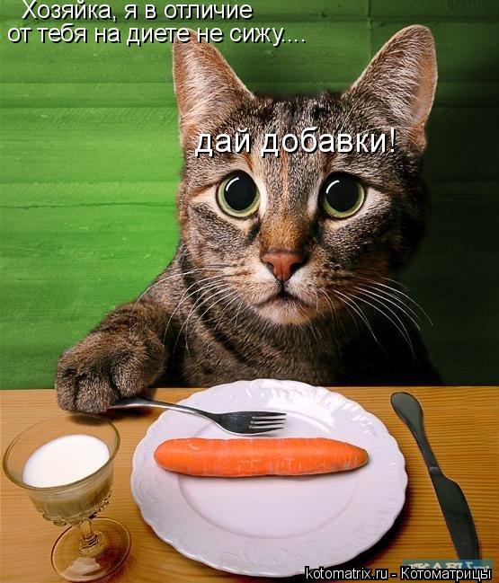 Котоматрица: Хозяйка, я в отличие от тебя на диете не сижу.... дай добавки!