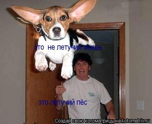 Котоматрица: это  не летучий мышь это летучий пёс