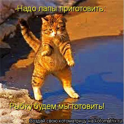 Котоматрица: -Надо лапы приготовить: Рыбку будем мы готовить!