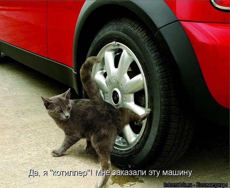 "Котоматрица: Да, я ""котиллер""! Мне заказали эту машину."