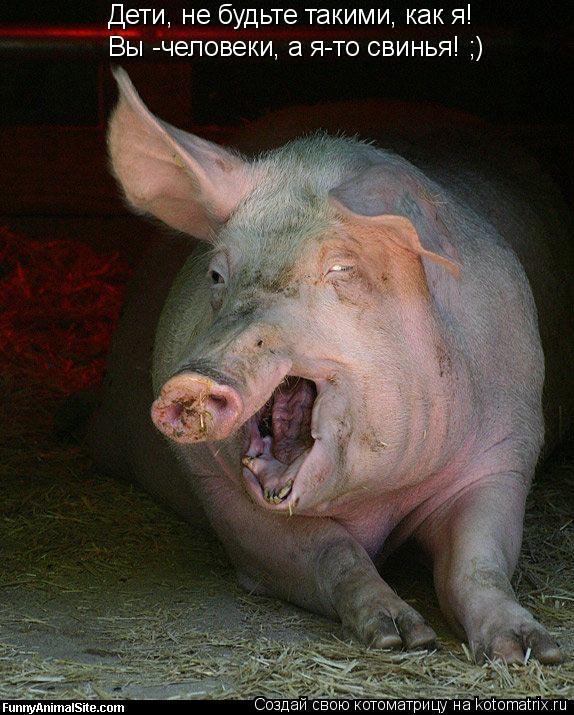 Котоматрица: Дети, не будьте такими, как я! Вы -человеки, а я-то свинья! ;)