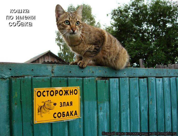 Котоматрица: кошка по имени собака
