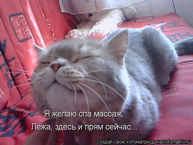 Котоматрица: Я желаю спа массаж, Лежа, здесь и прям сейчас...