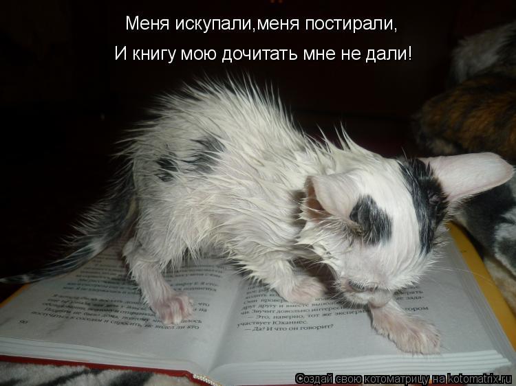 Котоматрица: Меня искупали,меня постирали, И книгу мою дочитать мне не дали!